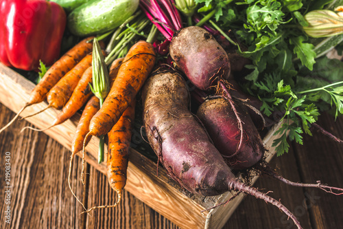 Bio food. Garden produce and harvested vegetable. Fresh farm vegetables in wooden box. Carrots and beets.