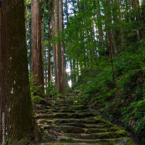 Foto op Plexiglas Weg in bos 森の小道2