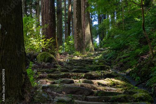 Tuinposter Weg in bos 森の小道