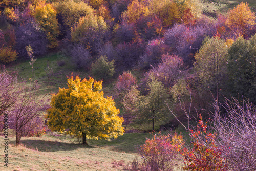 Papiers peints Vignoble Vibrant colored trees at mountainside in late autumn with garbage all around. Beautiful, colorful nature background.