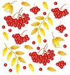 Mountain Ash pattern Vector. Fall autumn backgrounds