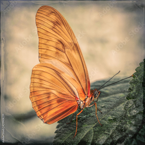 Butterfly, orange with texture, close-up
