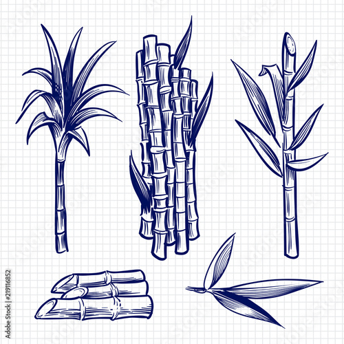 Fotografie, Obraz  Hand drawn sugar cane set vector illustration