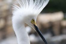 White Bird Profile