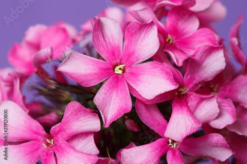 rozkwitle-kwiaty-bzu