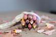 Les crayons pour l'école