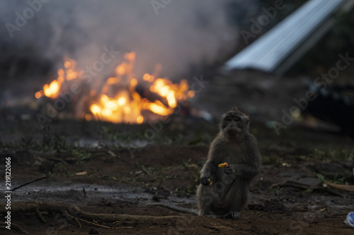 Monkey standing next to a fire in the forest