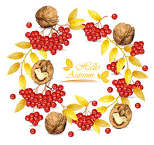 Autumn Wreath Walnuts And Mountain Ash Vector Realistic. Fall Roudn Decorations