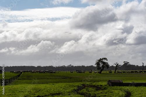 In de dag Bleke violet Farming spring farming landscape