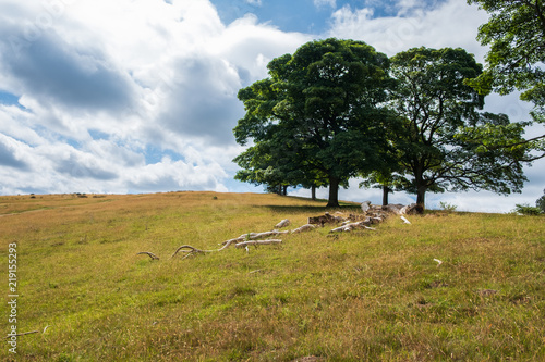 Beautiful Landscape in Lyme Park estate Fototapete