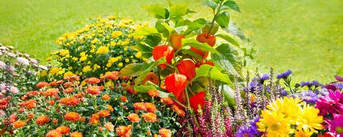 Herbst Blumen Im Garten Buy This Stock Photo And Explore Similar