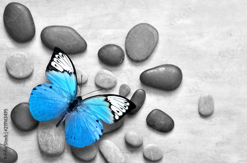 Blue butterfly on spa stone grey background. Canvas Print