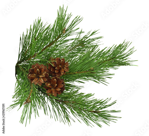 Pine branch with cones, close-up, isolated on white background without shadow. Christmas. New Year.
