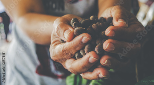 Slika na platnu Hands holding scoop of coffee beans Autumn harvest and healthy organic food conc