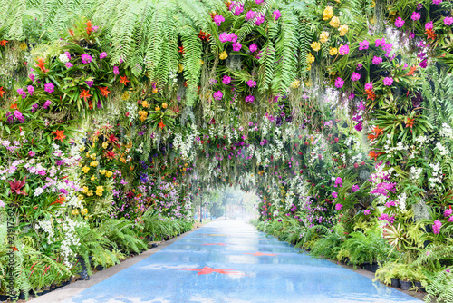 Romantic footpath in the park or garden. The arch covered with colorful orchid e.g pink, white, yellow. Beautiful walk way with camber and gorgeous flowers. A tunnel decorated with green moss and fern