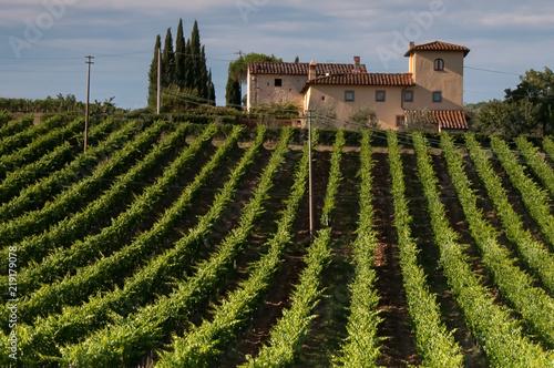 Fotografía  Tuscan vineyard and manor house on a sunny Italian day