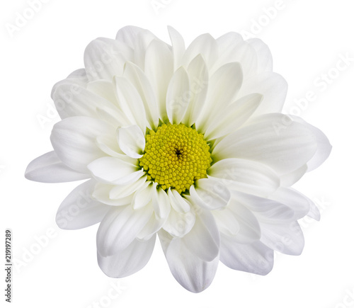 Foto op Canvas Madeliefjes White daisies, chamomiles isolated on white background. Clipping path