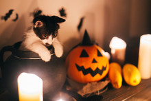 Cute Kitty Sitting In Witch Ca...