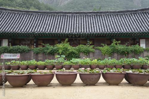 Fotografie, Obraz  Daejeonsa Buddhist Temple