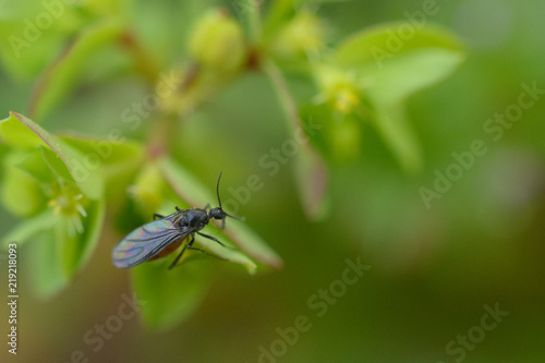 Fotografie, Obraz  Macro photography of insect on green plant