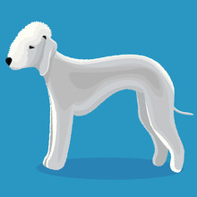 Bedlington Terrier Dog