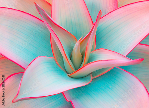 agave leaves in trendy pastel colors for design backgrounds - 219240241