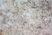 Texture Of Stone Shell