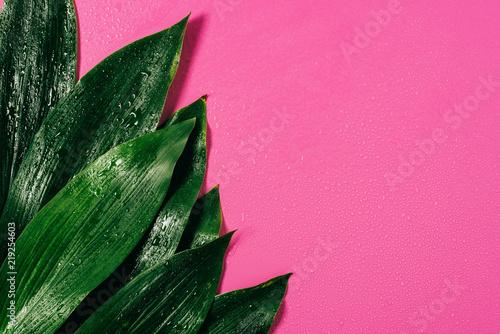top view of water drops on green foliage on pink background Tapéta, Fotótapéta