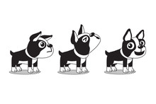 Vector Cartoon Character Cute Boston Terrier Dog Poses For Design.