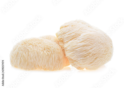 Cuadros en Lienzo lion mane mushroom isolated on white background.