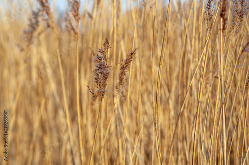 UK estuary marshland wild grass PC corrected Fototapet