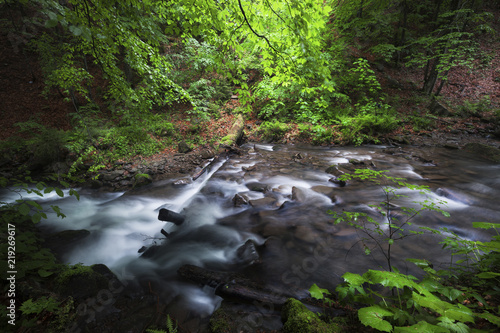Fototapety, obrazy: Stream in beautiful green summer deep forest