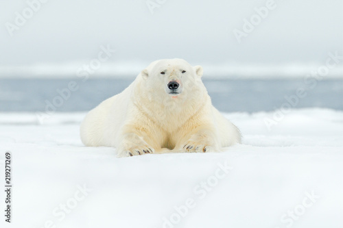 Spoed Foto op Canvas Ijsbeer Polar bear on drift ice edge with snow and water in Svalbard sea. White big animal in the nature habitat, Europe. Wildlife scene from nature. Dangerous bear walking on the ice.