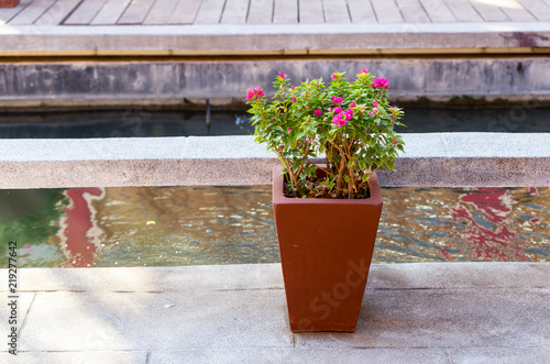 Bougainvillaea pots for gardening Fototapete