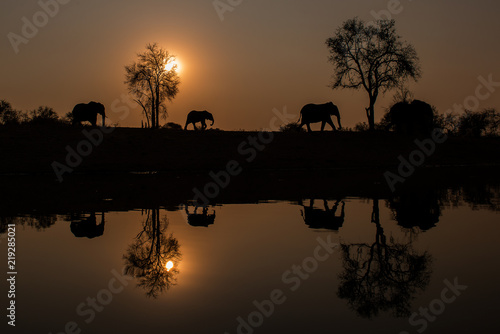 Elephants Usher In An African Sunset Canvas Print