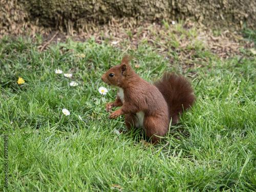 Plakat Wiewiórka w parku