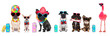 canvas print picture - row of dogs on summer vacation