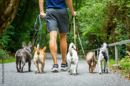 Tuinposter Crazy dog dogs with leash and owner ready to go for a walk