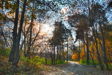 Beautiful Autumn Landscape In The Park