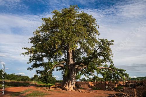 Canvas Print Giant baboab tree, adansonia digitata, in a gurunis village in the southwest of Burkina Faso, West Africa