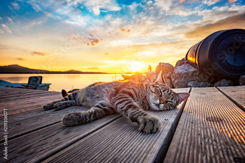 Stray tiger cat on the pier in the lagoon enjoys the sunset