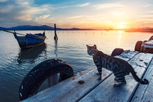 Stray Tiger Cat Standing On The Pier In The Lagoon At Sunset