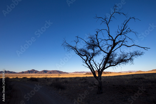 landscape of africa in the sunset