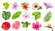 Set With Beautiful Tropical Flowers And Green Leaves On White Background