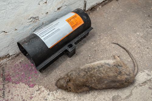 Tote Ratte im Keller - Rattenplage – kaufen Sie dieses Foto