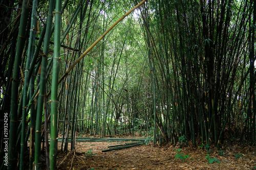 Foto op Plexiglas Bamboe green bamboo forest