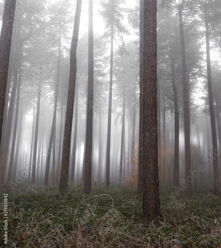 Fototapeten Wald Fog in a forest in the winter