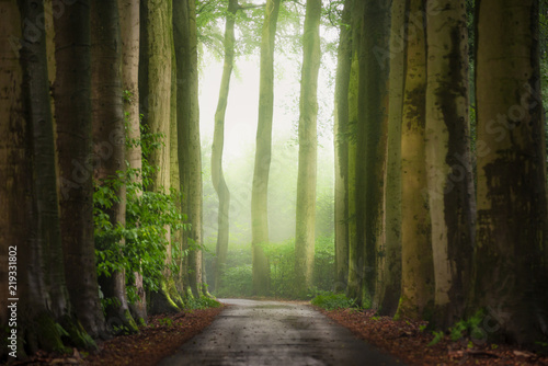 Foto auf Acrylglas Wald im Nebel Light and fog at the end of the forest lane