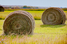 Rolled Hay Ready To Load