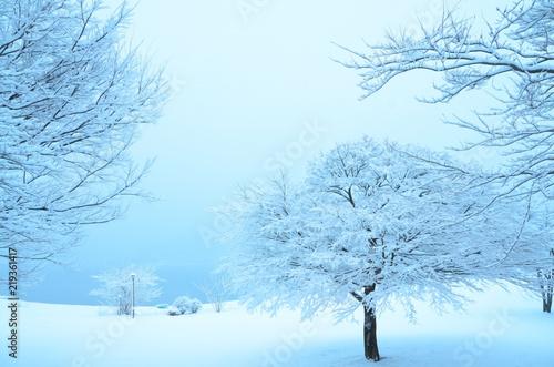 Fotografie, Obraz  降り積もった雪 白い背景 クリスマス